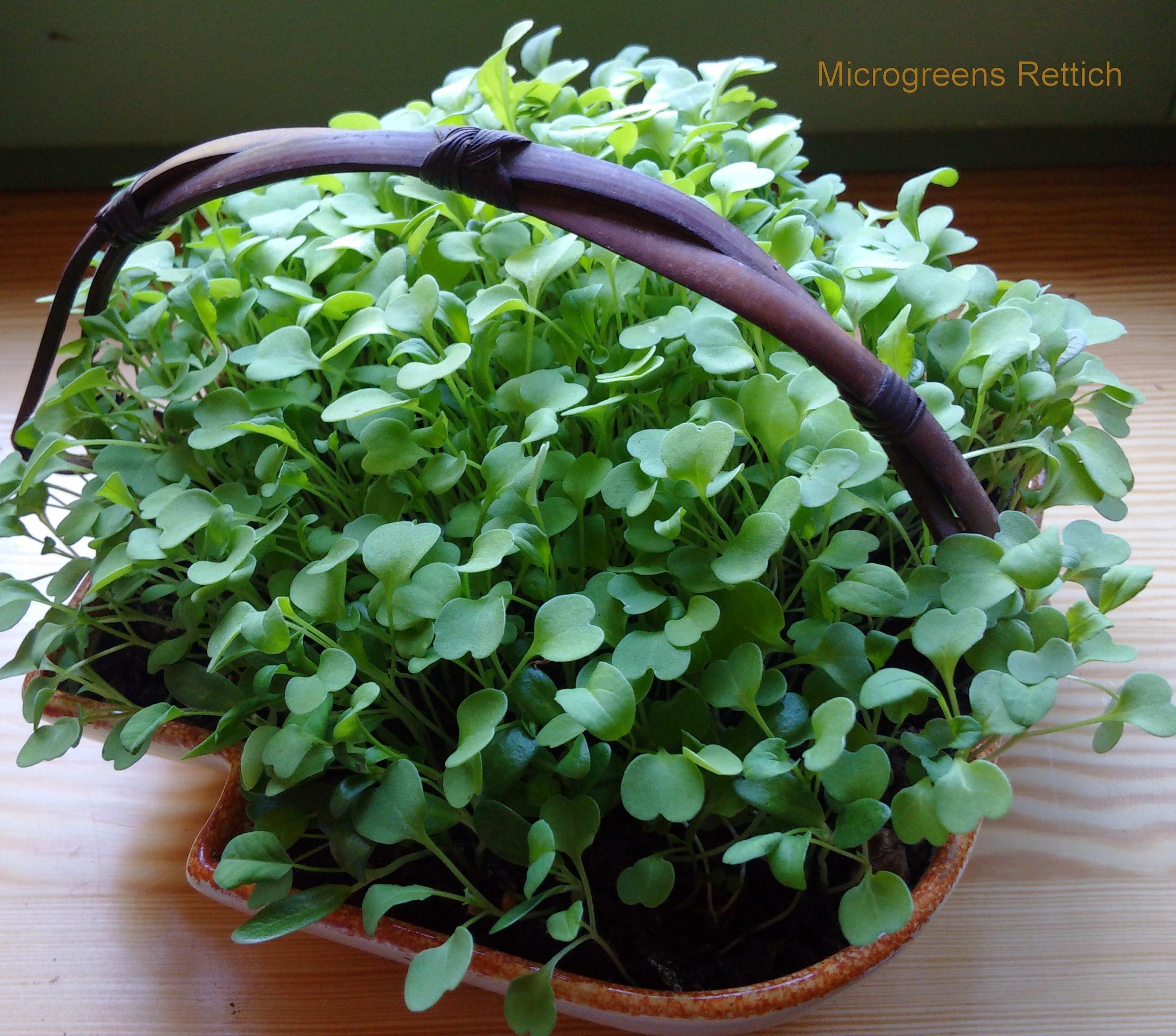 Sprossen und Microgreens anbauen